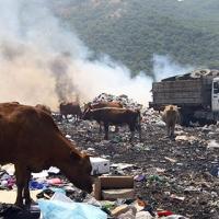 Глобальная экологическая катастрофа уже близко